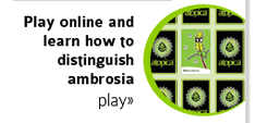 play online and learn how to distinguish ambrosia